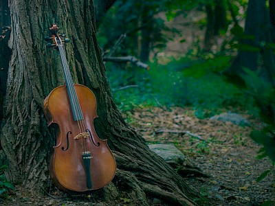 Nature's Power in Music