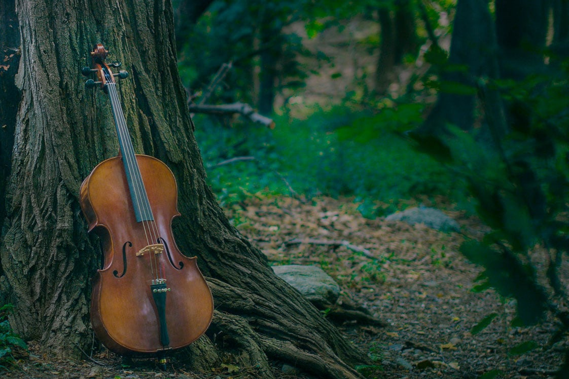 Cello in a forest